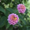 Photos: 三色きれい