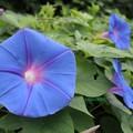 青い美しさ