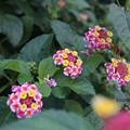 Photos: まだまだ咲く