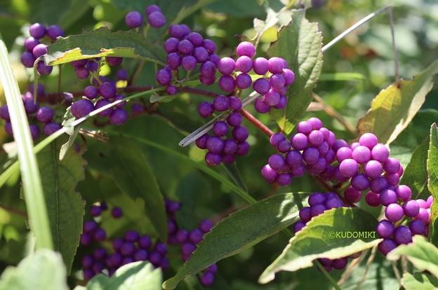 紫の美しさ