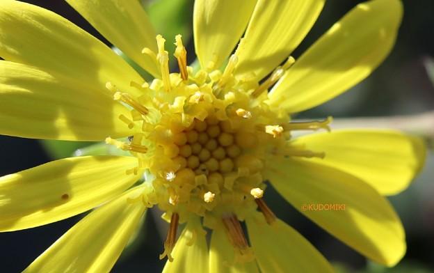 まぶしい黄色