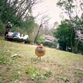 Photos: 地元のアイドル(3)