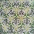 210916_茅ヶ崎・小出川_テレイドスコープ画像<シロバナマンジュシャゲ>_H210916G2281_MZD17F1.8_teleid-2_CAF+TR_X10As