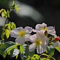 211002_平塚・花菜ガーデン_バラ_G211002YC3718_MZD300P_FH_C-SG_FS2_X10As