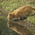 サンヨン で撮った その他の動物-1