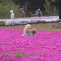 Photos: ふかふか絨毯