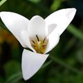 庭の花b 逆三角形