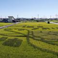 田んぼアートを見に行ってきました