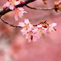 Photos: ピンクの世界