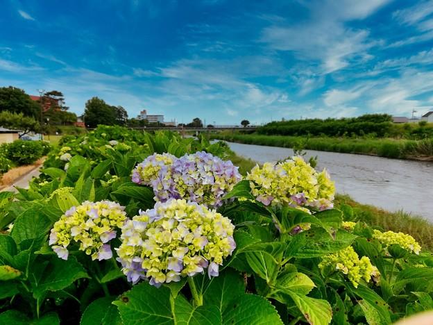 Photos: 川辺の散歩道