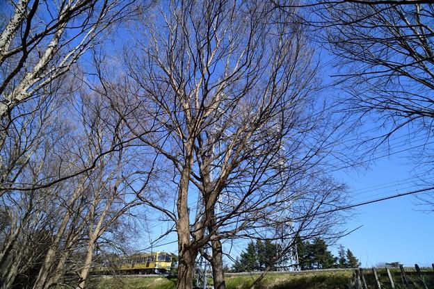 Photos: DSC_3681_00001