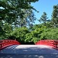 弘前城 杉の大橋