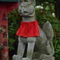 Photos: 天満宮狛犬