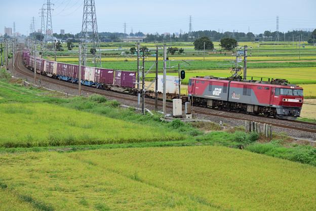 EH500電気機関車牽引貨物列車