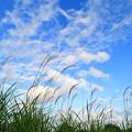 那珂川と桜川合流地点付近の空