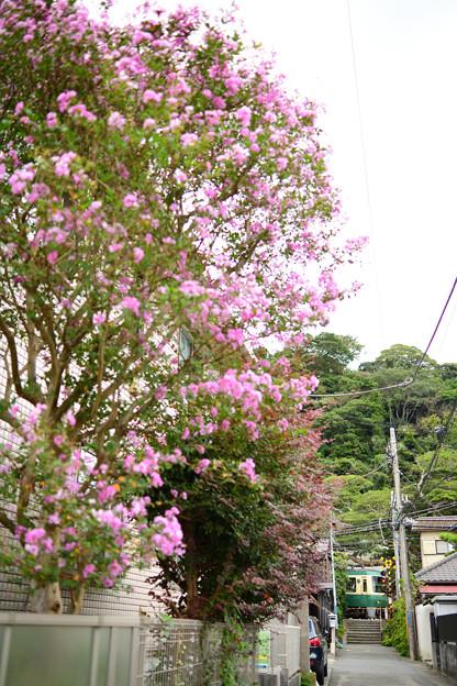 長谷 御霊神社へ抜ける道