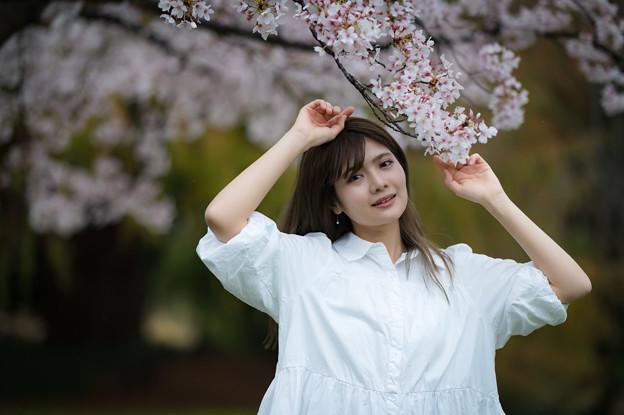 「拝啓 今日から桜日記を書き始めようと思います。」
