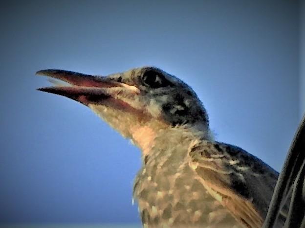 この鳥は何を考えているのだろうか