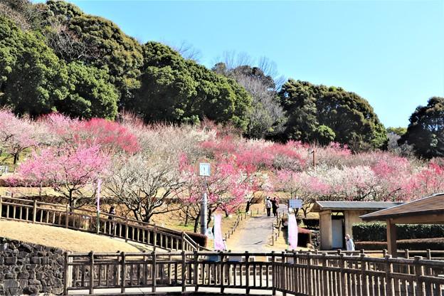 Photos: 赤塚梅園