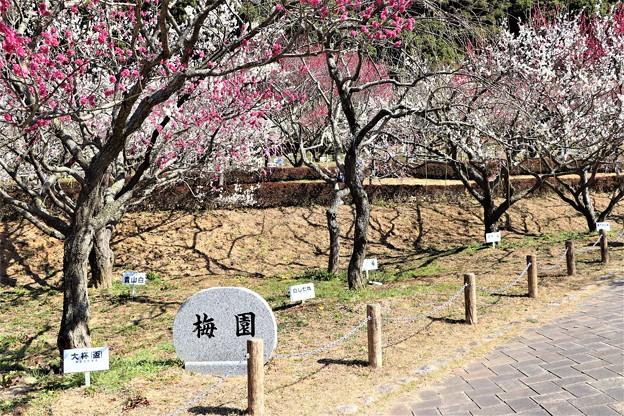 赤塚山梅園