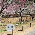 Photos: 赤塚山梅園