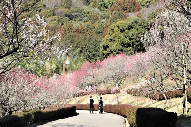 赤塚山梅園散策路