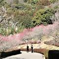 Photos: 赤塚山梅園散策路