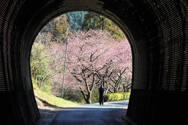 芳ヶ入トンネルから
