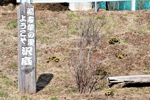 Photos: 福寿草の里