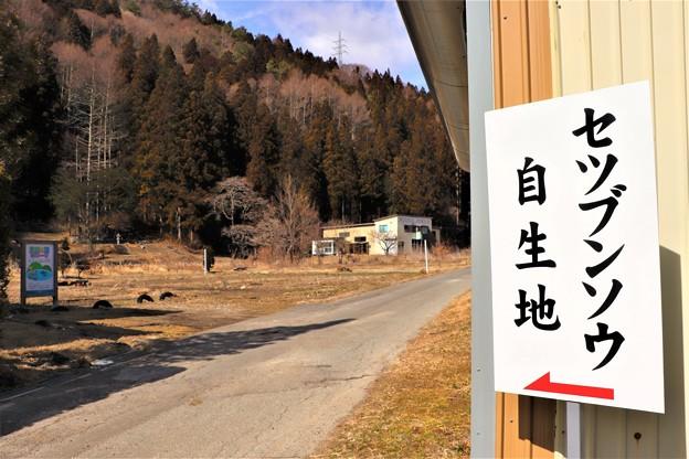 Photos: セツブンソウ自生地案内