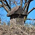 Photos: 城跡の石祠