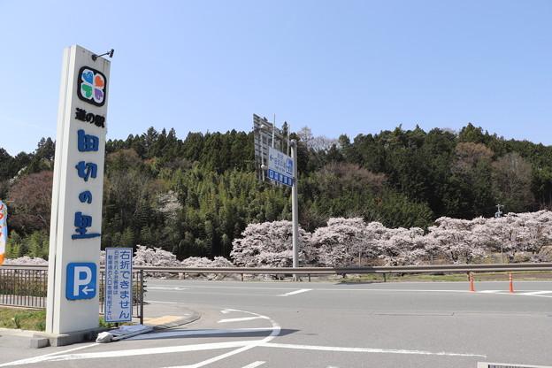 「道の駅 田切の里」からの桜並木