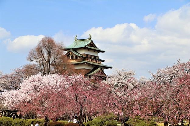 桜に高島城