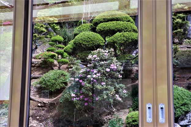 ガラス戸映る石楠花