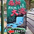 原生林と水苔名所大滝