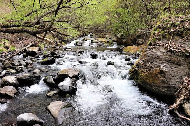 滝の湯川の渓流