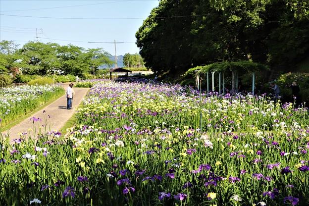 賀茂花しょうぶ園