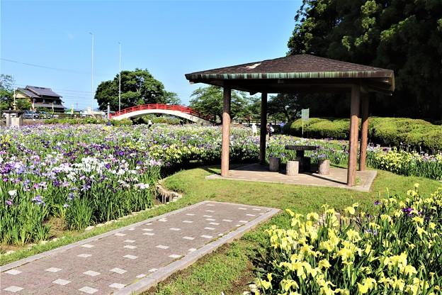 東屋と花しょうぶ園