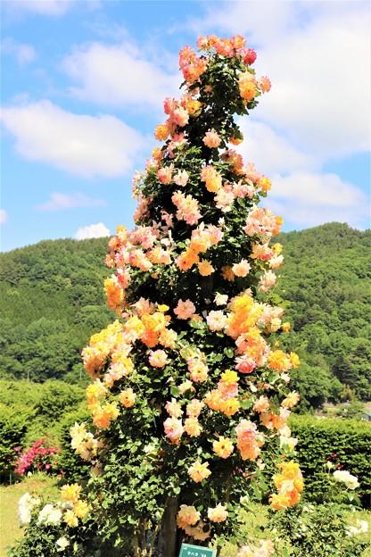 薔薇の塔(サハラ ´98)