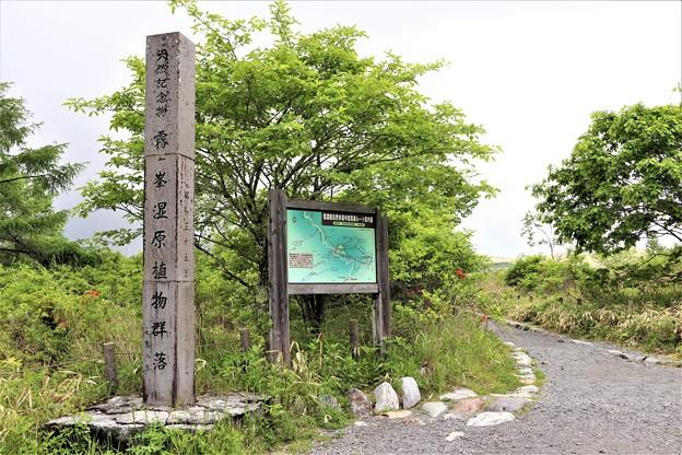 「天然記念物霧ケ峰湿原植物群落」石碑