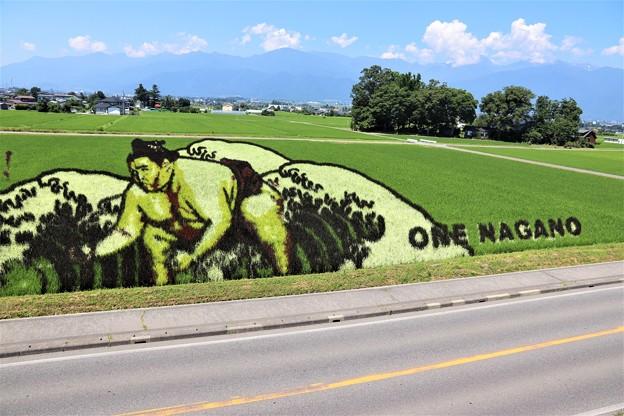 色の異なる稲を使って巨大な絵が浮かぶ田んぼアート