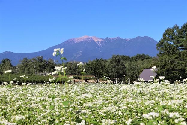 そば畑と御嶽山