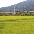 Photos: 田園風景の中を走るJR飯田線
