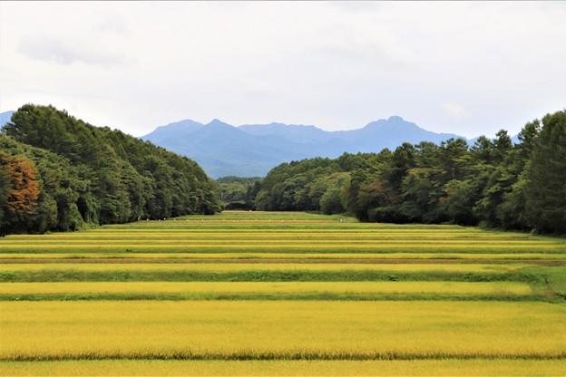 八ヶ岳と棚田
