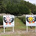 宮田村観光協会アサギマダラ蝶のパネル