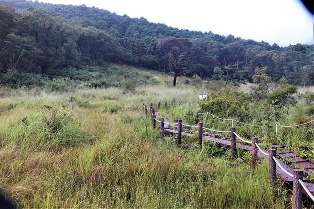 葦毛湿原散策木道