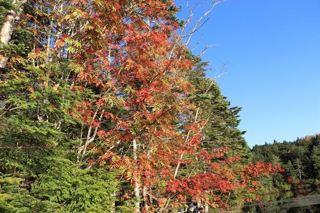 ナナカマドの紅葉の始まり