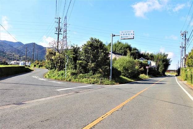 県道81線沿い