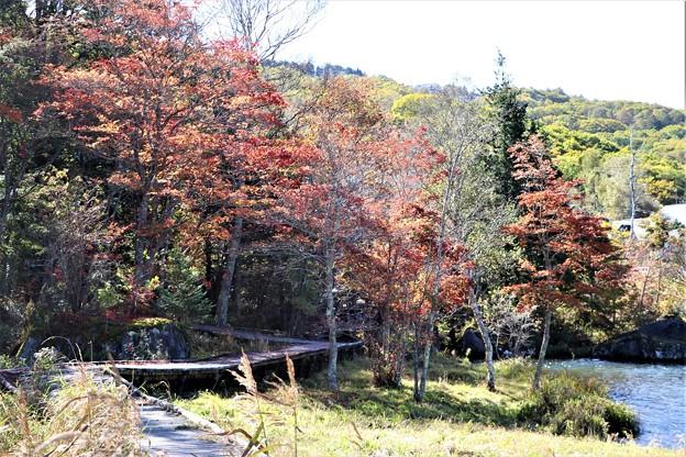 湖畔の木道の紅葉
