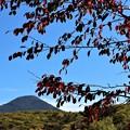 蓼科山と桜の紅葉